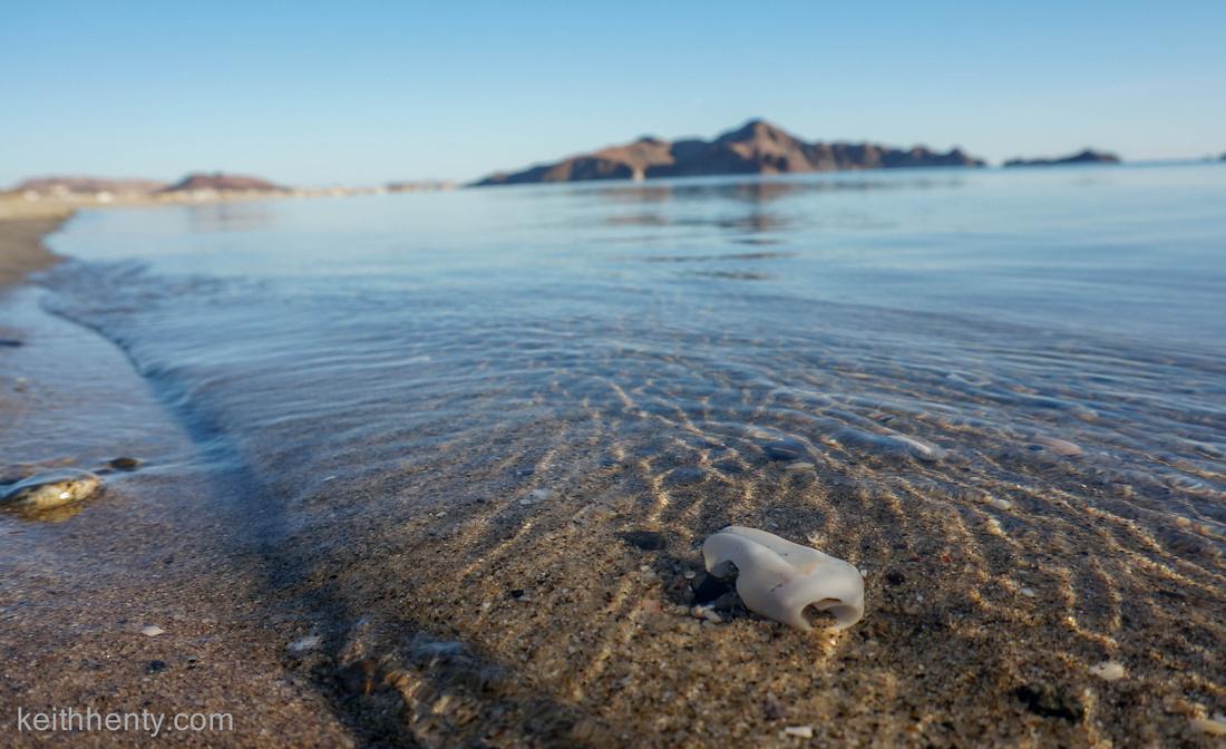Shell in water, Gonzaga bay